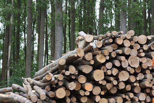 Lesna biomasa / Holz – Biomasse